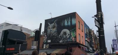 Owls 🦉