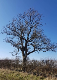 Tree!!